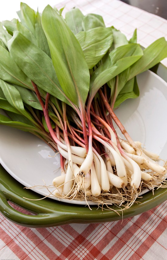 Fresh ramps, root to tip