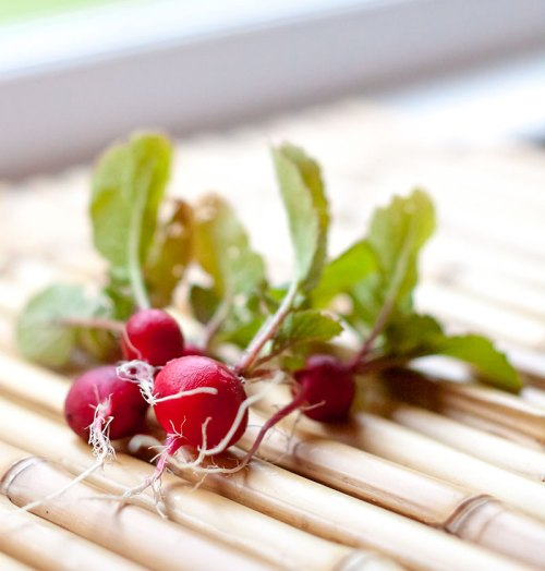 Just-picked radishes
