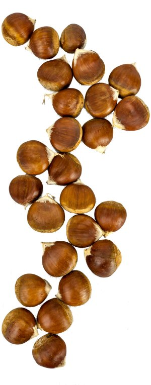 Fresh chestnuts in a long row