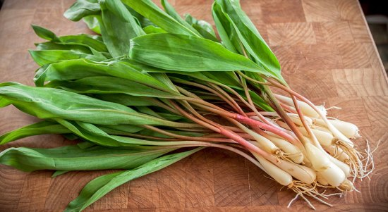 Fresh ramps, ready to slice