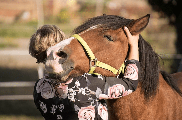 How Your Horse Can Benefit From Essential Oils