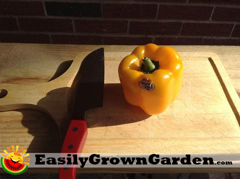 grow peppers from seed