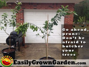 The Tree Butcher: How to prune your trees