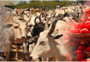 DHQ intervenes as union suspends supply of cattles, foodstuffs to South-West
