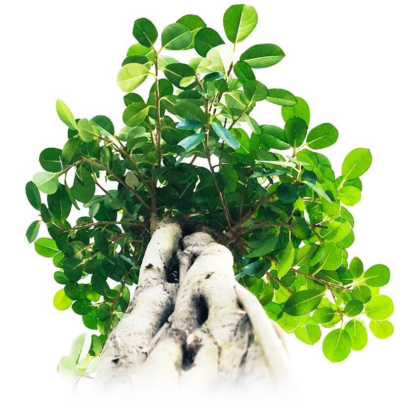 観葉植物のレンタル