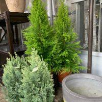 冬の寒い外でも素敵な植物を🌿💗