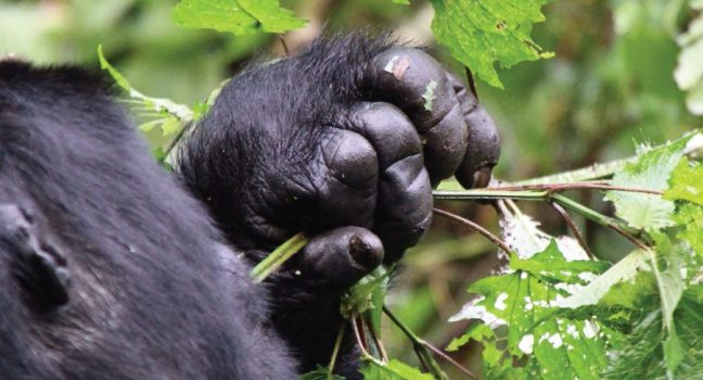 3 Days Bwindi Gorilla Trekking Safari