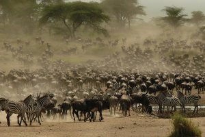 Serengeti Wildebeest Migration Safari