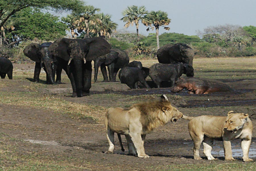 Katavi National Park