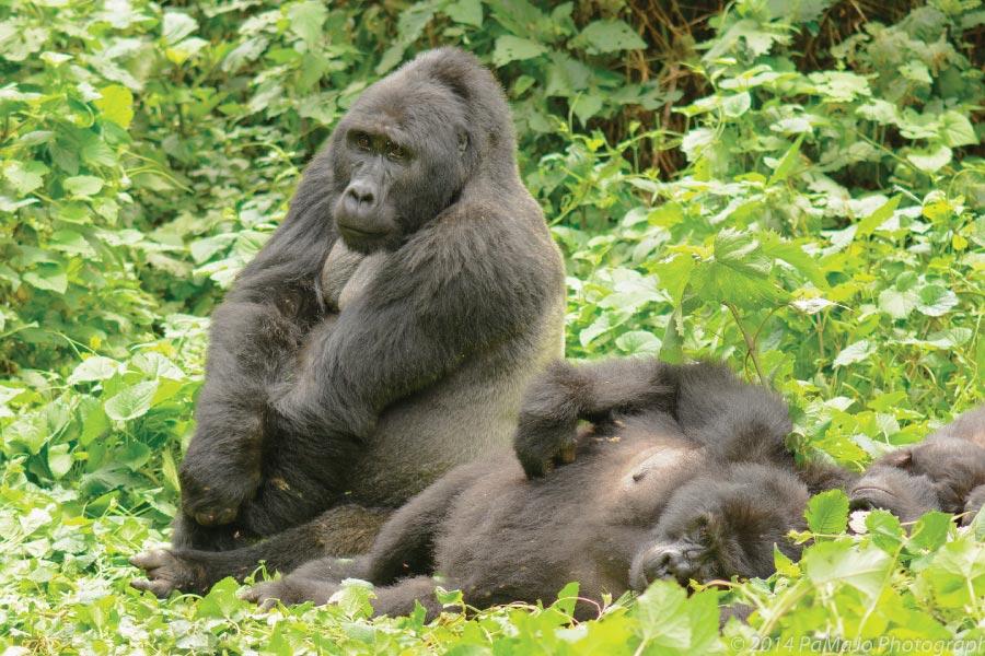 Bwindi Gorilla Trekking - Gorilla group