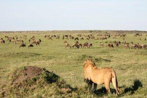 Spirit of Kenya Safari