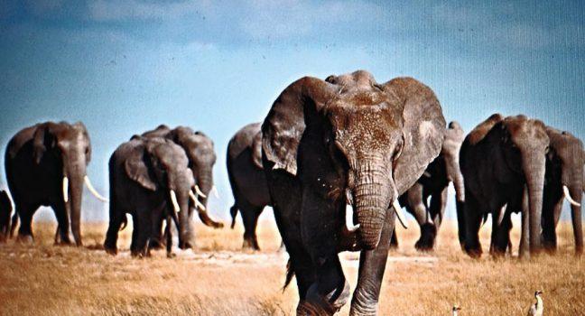 Kenya Great Wildlife Safari