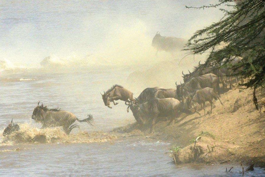Masai Mara National Reserve Migration