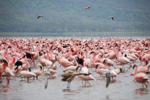 Lake Nakuru Safari