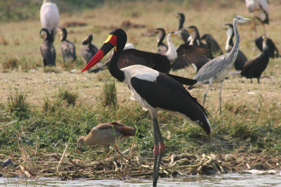 Birding in Uganda - Bird Watching