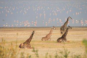 Tanzania Northern Circuit Safari, Tanzania Safari