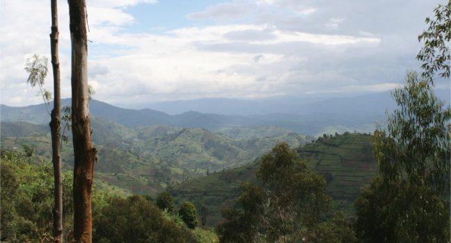 Rwanda Gorillas & Lake Kivu Tour