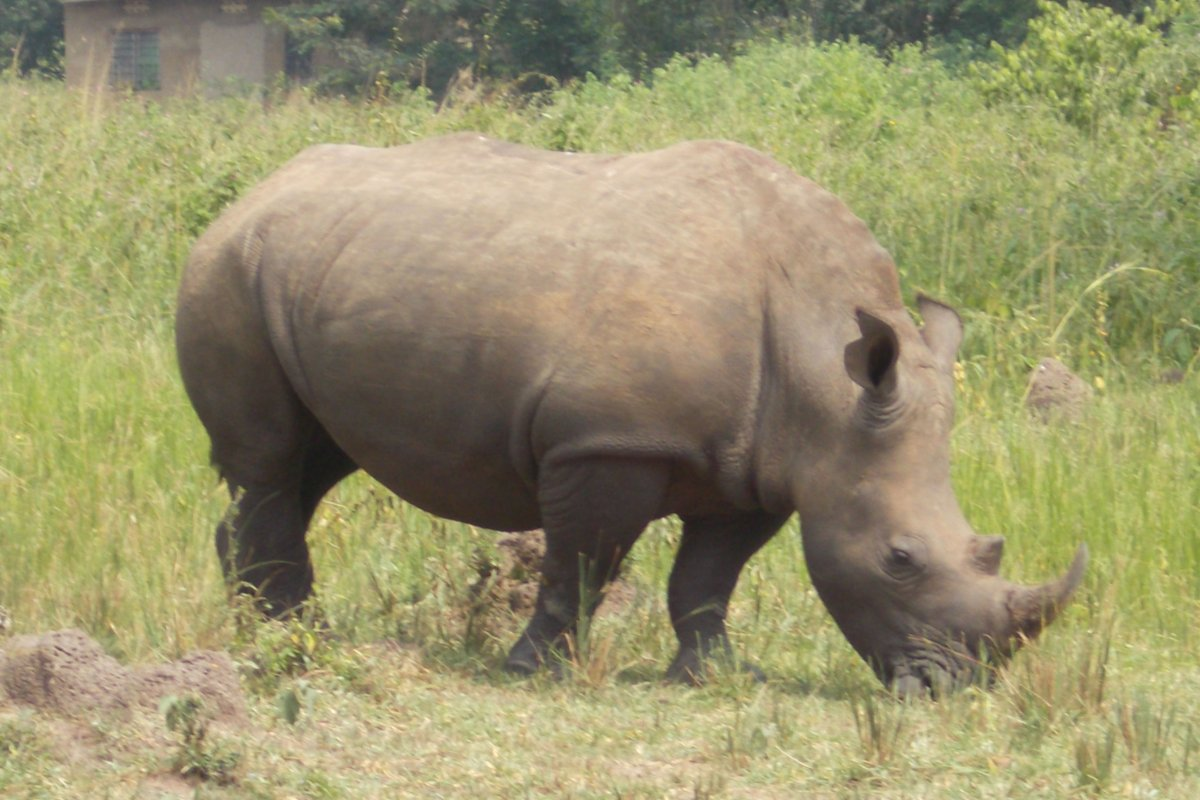 ziwa rhino sanctuary - murchison falls safari - big 5