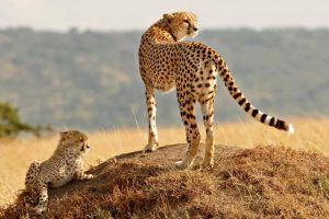 Kenya Safari Tours