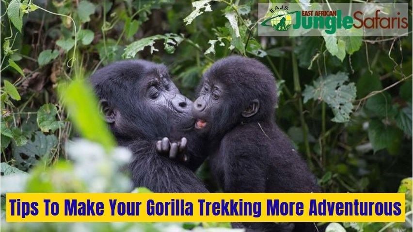 10 Vital Tips To Make Your Gorilla Trekking More Adventurous