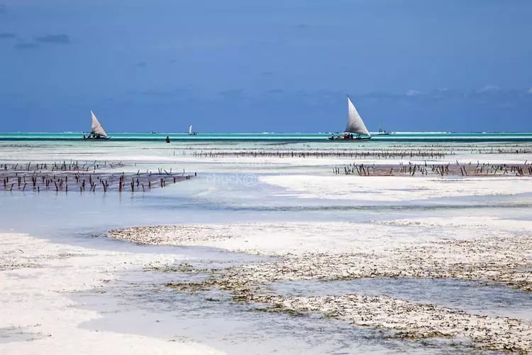 Jambiani Low Tide