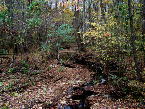 Babbling brook and creek bed on roadside