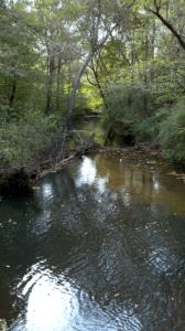 Placid Creek 03 Enhanced Resized 20