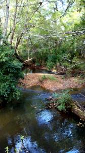 Placid Creek 04 Enhanced Resized 20