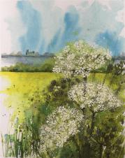 Fenland Cow Parsley - Caroline Furlong