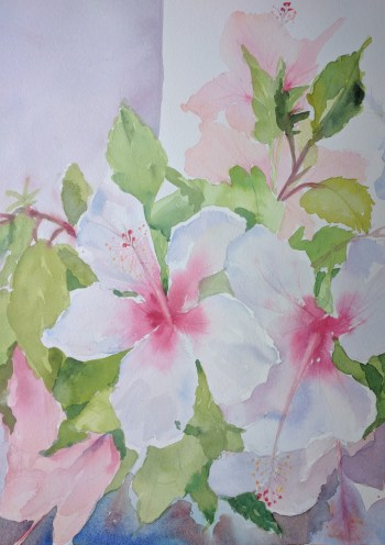 Hibiscus blooms. Watercolour by Susanne Taylor