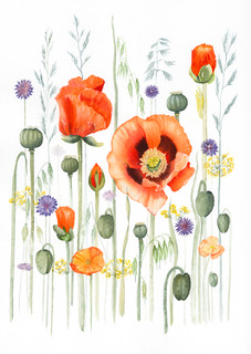 Poppies. Watercolour by Denise Schoenberg