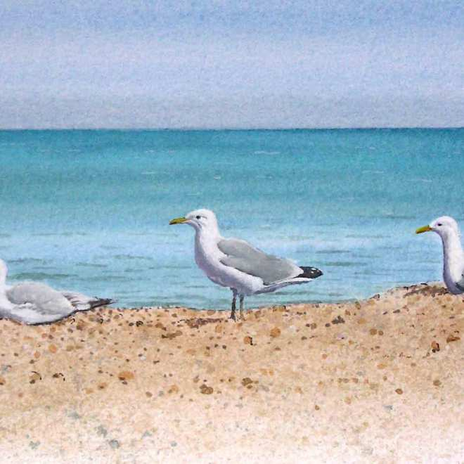 Seagulls-at-Aldeburgh-by-Jan-Couling