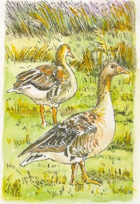 *SOLD* Geese in the Evening by Fran Godwood