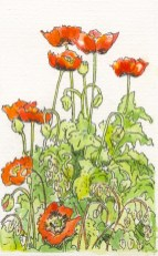 Poppies in my studio by Fran Godwood