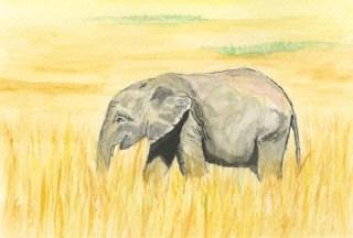 Elephant Grass by Isobel Gladstone
