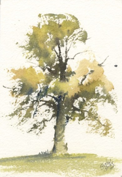 Sunlit Boughs by Stephie Butler