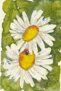 Ox-eye Daisies II by Caroline Furlong