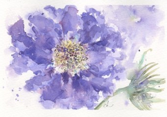 Scabious Blue by Chris Lockwood