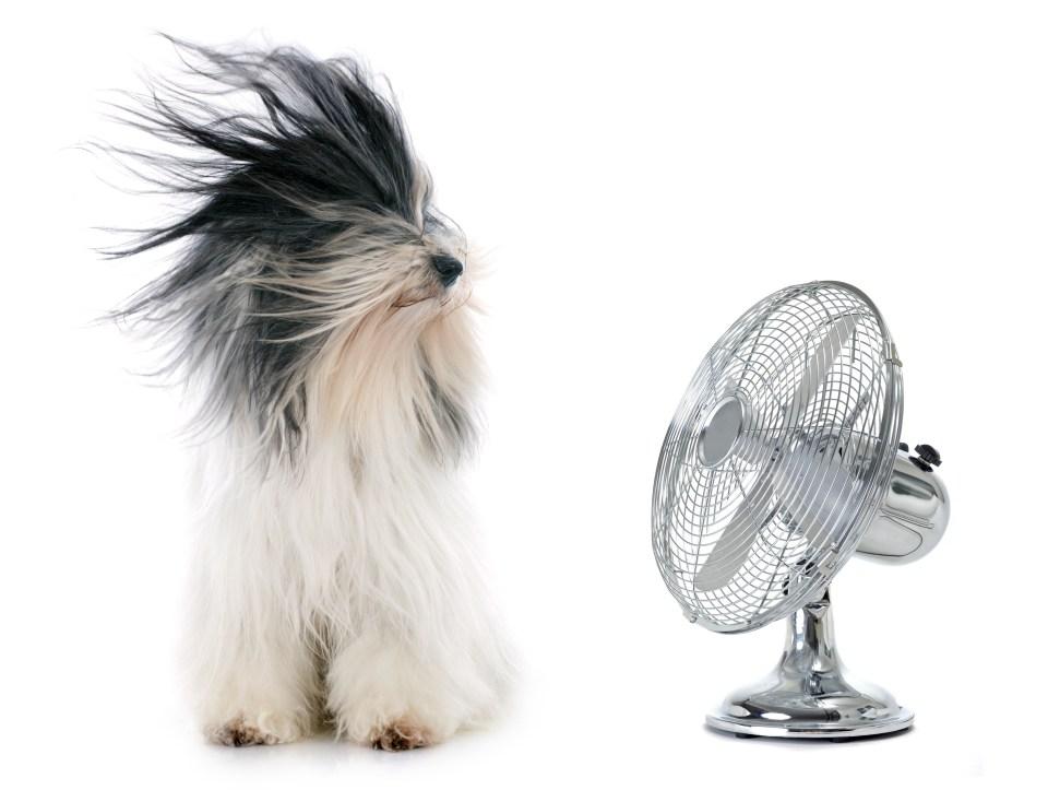room fan blowing dogs hair