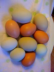 I chose my chickens for their egg color