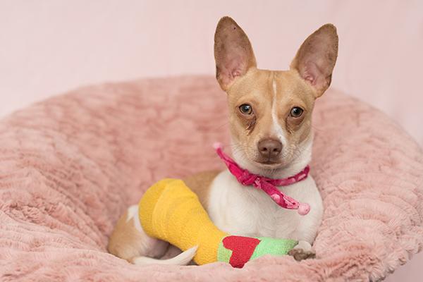 East Bay SPCA Home Page Pet Adoption Oakland CA