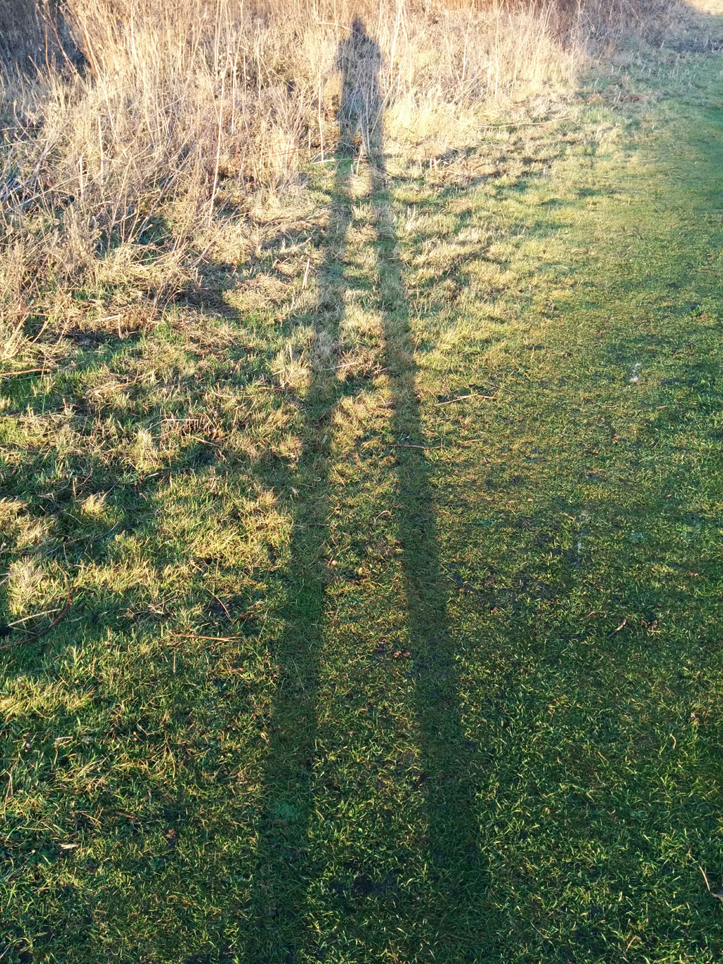 Giant shadow