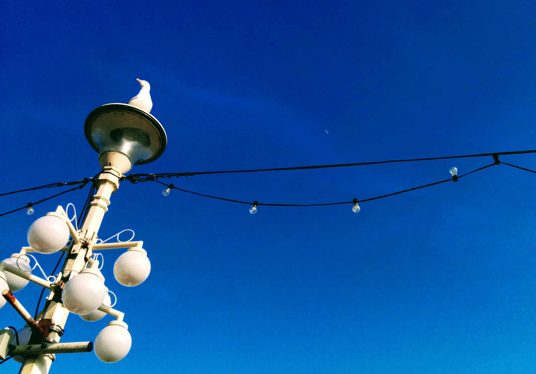 bluesky & seagull - An Eastbourne Diary