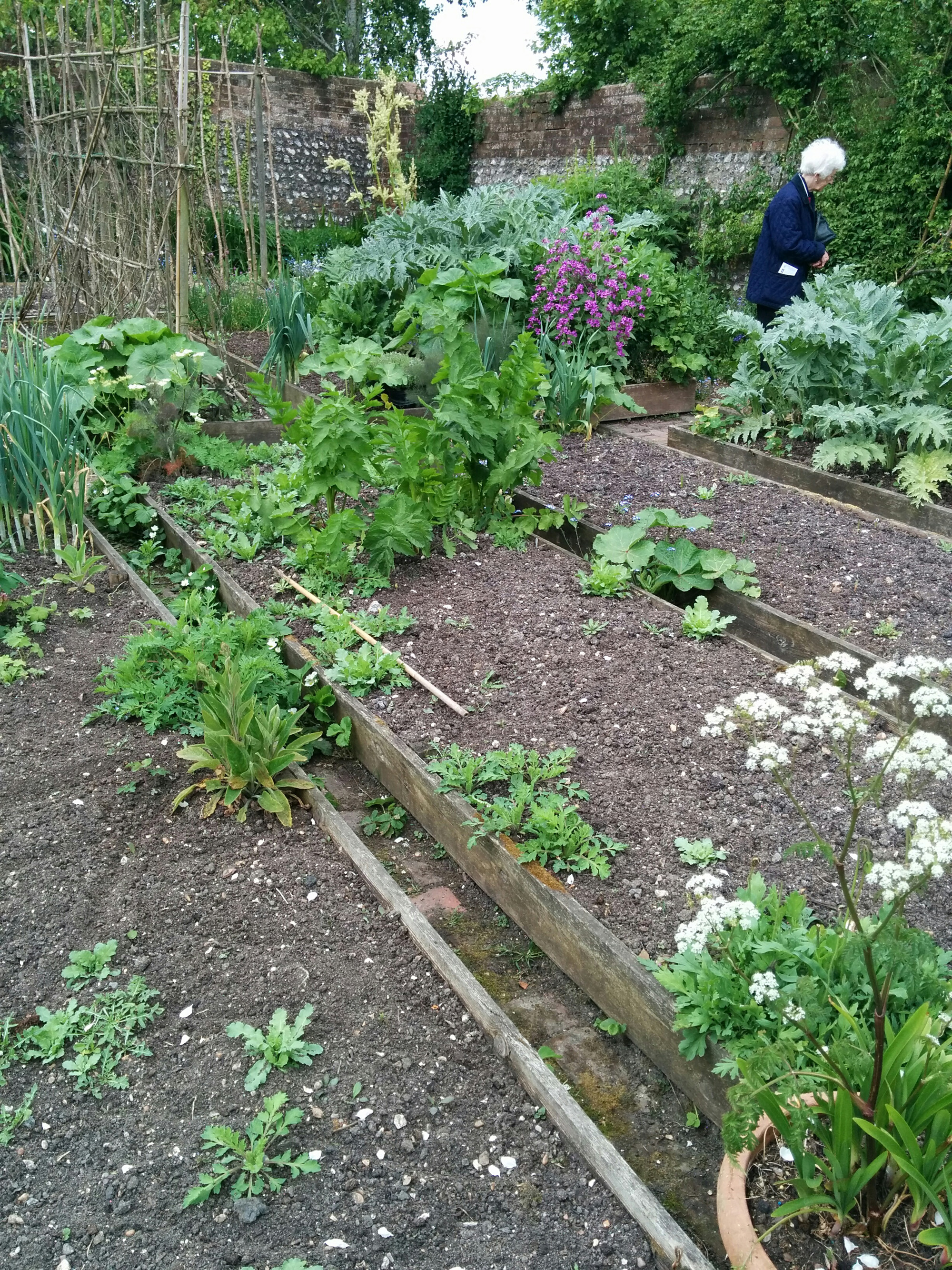 raised beds in the Charleston garden