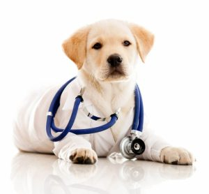 pet-vet-east-coast-adoption-agency