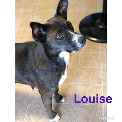 Louise (NY-Leah)