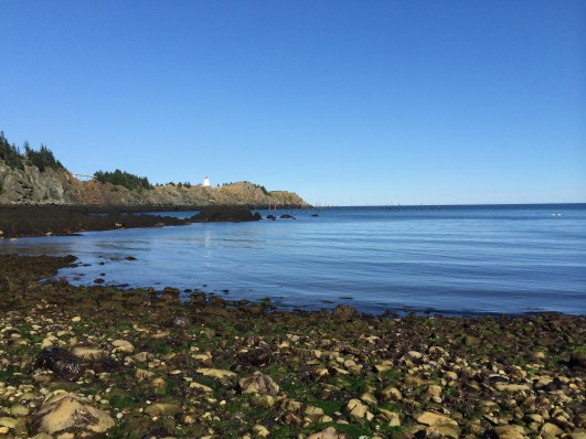 pettes cove – perfect for catching friendly seals