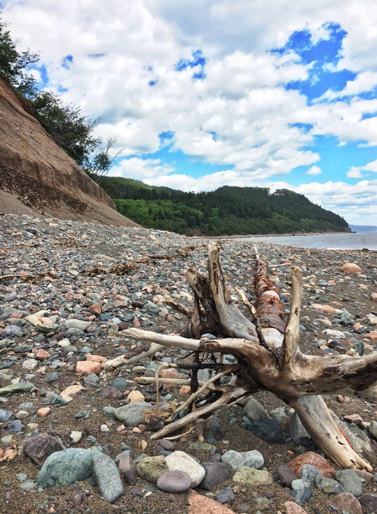 Driftwood Long Beach - Fundy Trail Parkway