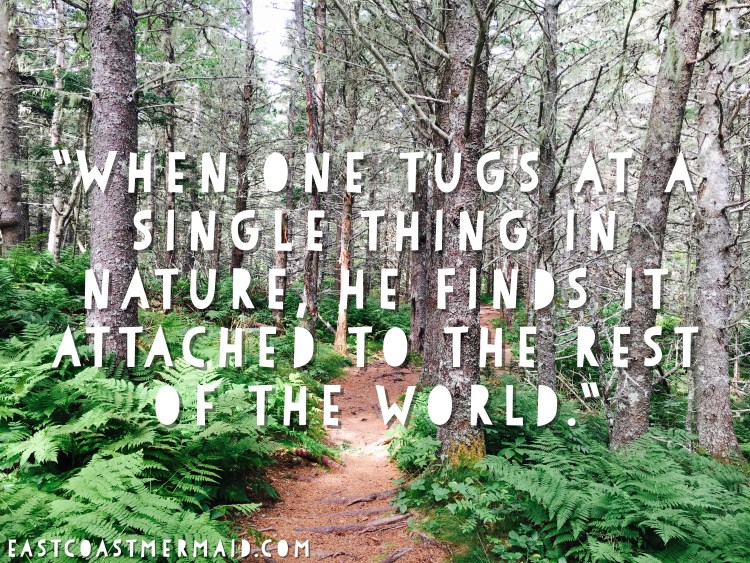 when one tugs at a single thing in nature, he finds it attached to the rest of the world