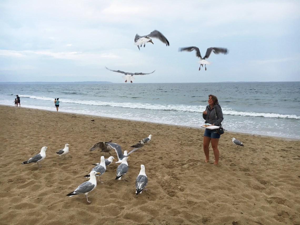 seagulls-oob-east-coast-mermaid